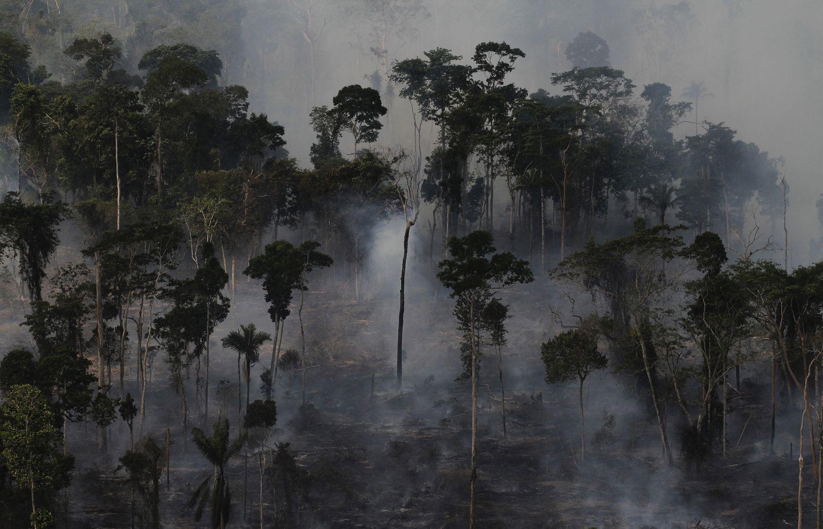 Brasilien/ Abholzung