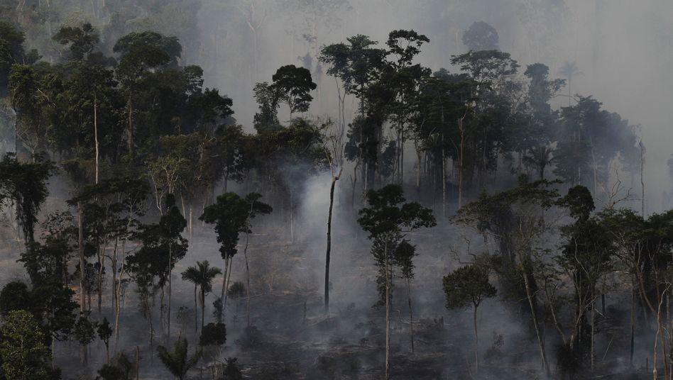 Rodung bei Novo Progresso in Nordbrasilien: Speicher von einer Billion Tonnen Kohlenstoff