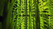 Daimler-Vorstand fordert mehr Geld für europäische Datenwolke