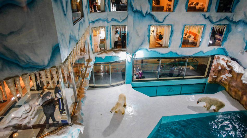 Ausblick auf das Eisbärengehege: »24 Stunden am Tag Ihre Nachbarn«