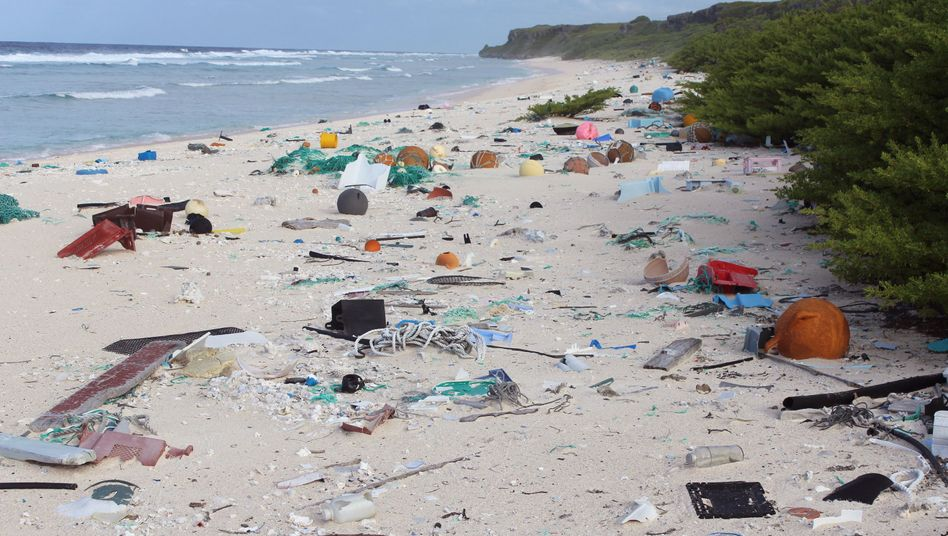 Strand auf Henderson Island mit Plastikmüll: Kettenreaktion durch Verwesungsgeruch