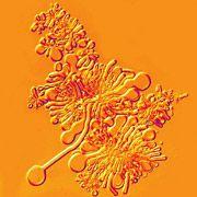 Modellzelle aus speziellen Membranen: Einzelbausteine von Erbsubstanz können durch sie hindurch diffundieren, um dann der Vermehrung eines DNA-Stücks zu dienen
