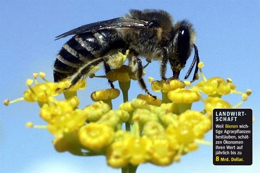 Artenschutz / Biene