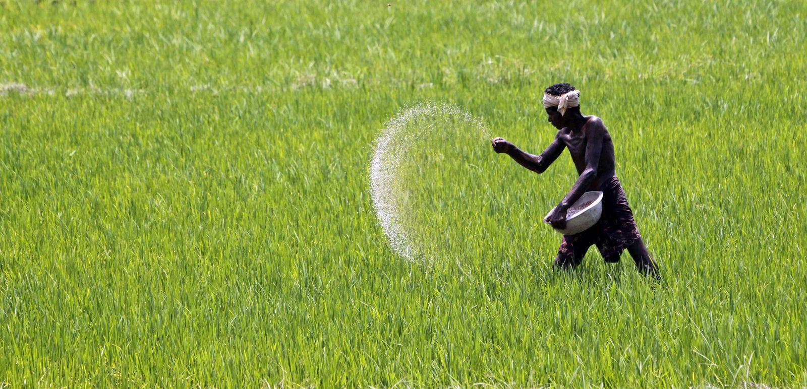 Indien Landwirtschaft/