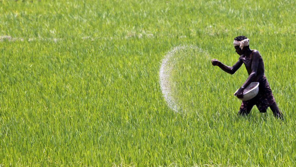 Mit Dünger gegen Hunger: Steigende Erträge in der Landwirtschaft weltweit