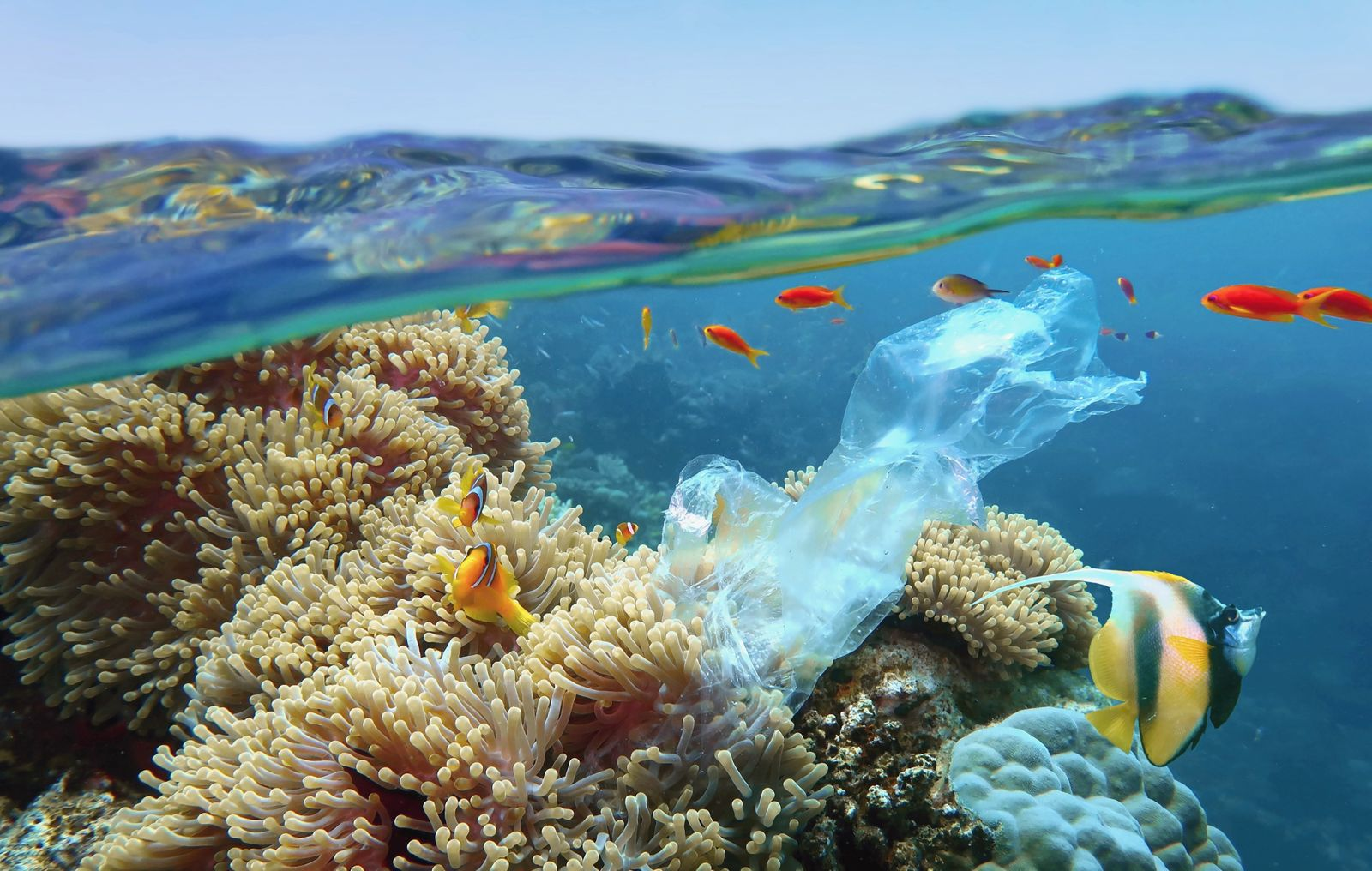 The world ocean pollution. Beautiful tropical coral reef with sea anemones, clownfish and colorful coral fish - polluted with plastic bag. The sea surface view.
