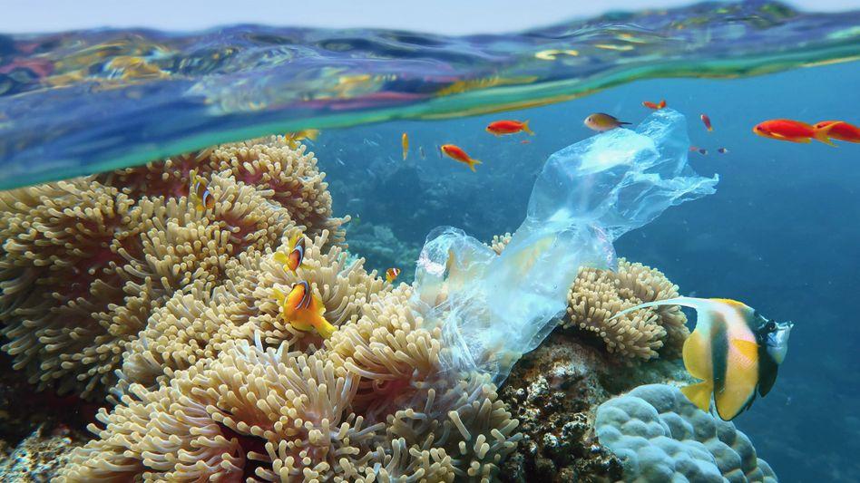 Jedes Jahr gelangen Millionen Tonnen Plastikmüll in unsere Ozeane: Mittlerweile gelangt Plastik zurück in unsere Nahrungskette