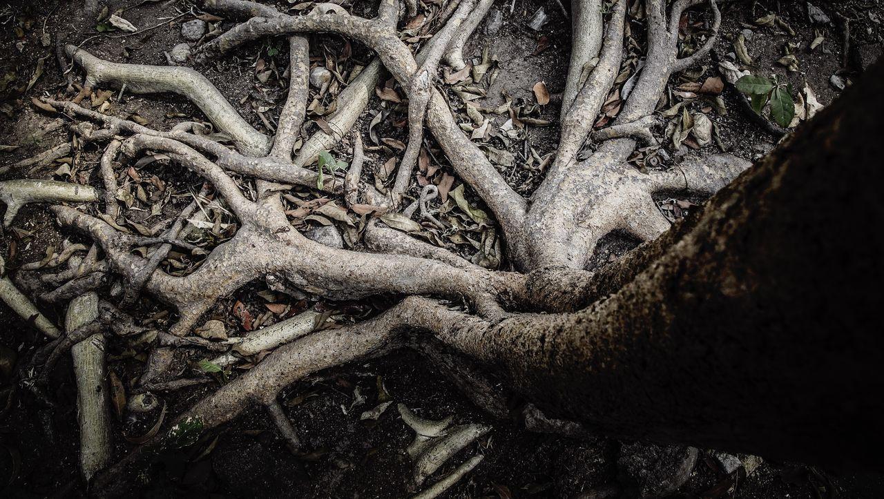 Böden als Kohlenstoffsenke: Klimaschutz von unten - DER SPIEGEL
