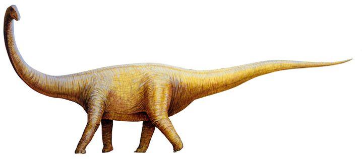 Standardbauplan eines Sauropoden (hier: Titanosaurus): Säulenbeine, Stempelfüße, extrem langer Hals und Schwanz
