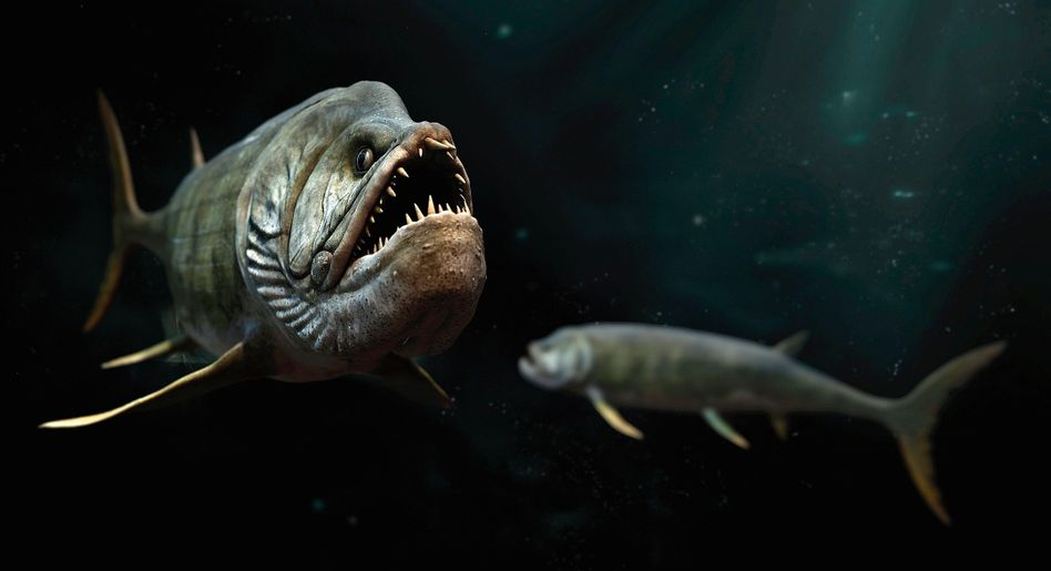 Prähistorischer Knochenfisch Xiphactinus (Illustration)