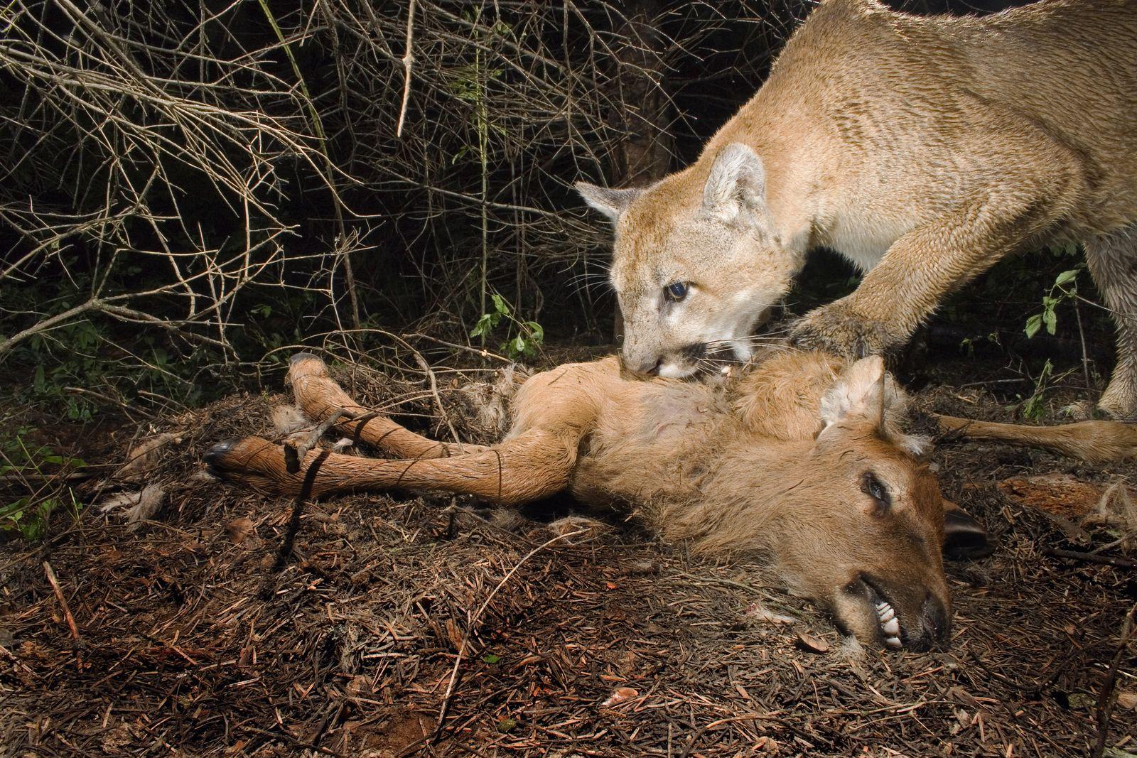 NICHT MEHR VERWENDEN! - Puma