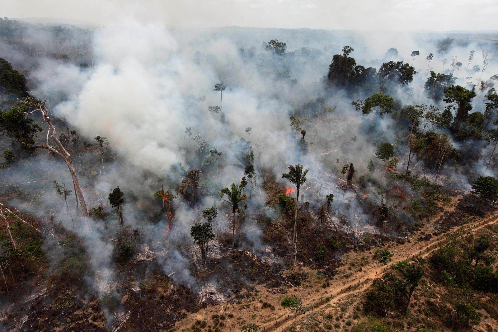 Brazil Amazon Destruction