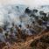 EU importiert zwei Millionen Tonnen Soja von illegal gerodeten Flächen