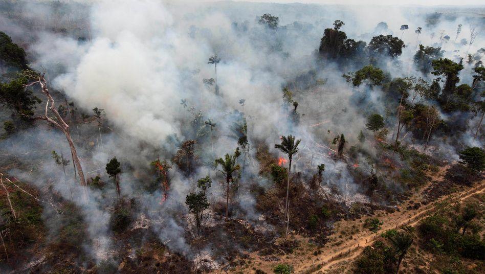 Eine illegale Rodung im Amazonasregenwald im Jahr 2009