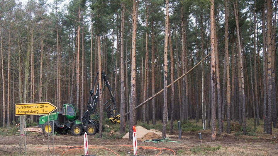 Ein Holzvollernter fällt im Auftrag des US-Elektrobauers auf dem künftigen Fabrikgelände im brandenburgischen Grünheide Bäume