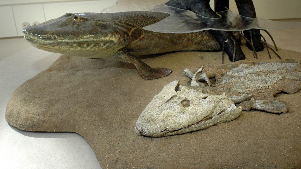 Evolution: Das Bein entstand im Wasser