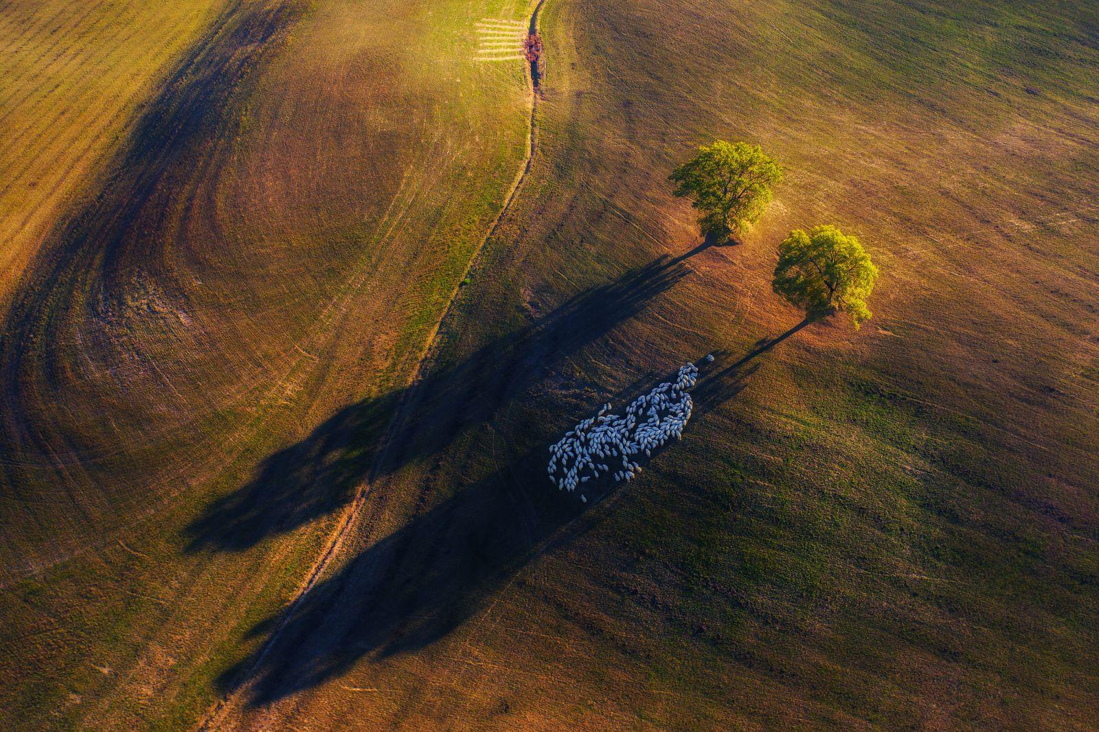Nature TTL POTY 2020/ Landscape/ Winner