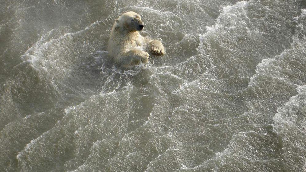 Arktis: Bedrohte Bären, suspendierter Forscher