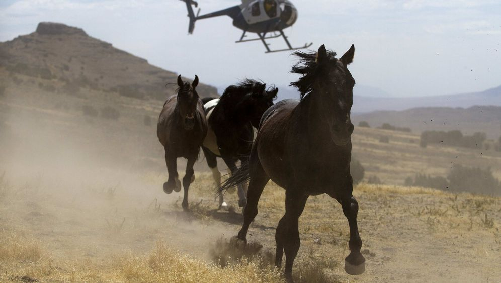 Hightech-Cowboys: Mustangjagd per Helikopter