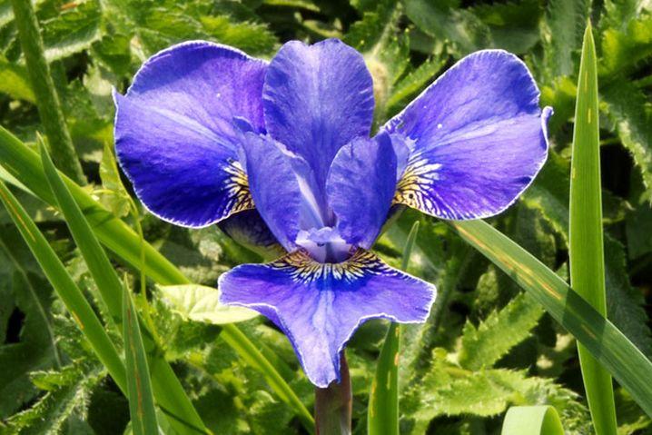Der Hintergrund ist scharf und lenkt von der Blume ab