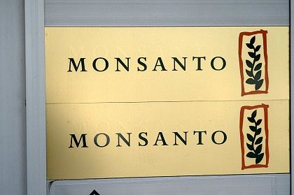 Monsanto's offices in Düsseldorf: The GM crop MON 810 has been banned in Germany.