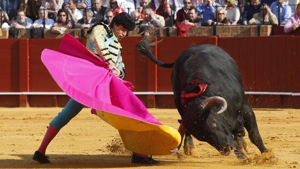Stierkampf in Spanien: Blutiges Spektakel