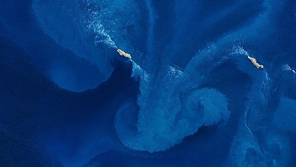 Die beiden westlichen Inseln der Jason Islands im Phytoplankton-Wirbel