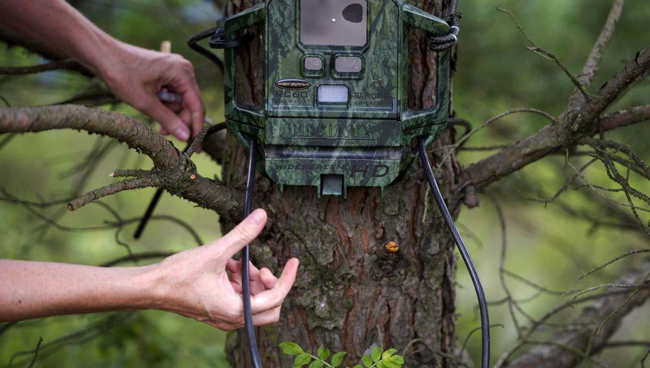 Fotofalle im Wald: Wildtiere unter Beobachtung - und manchmal auch Spaziergänger