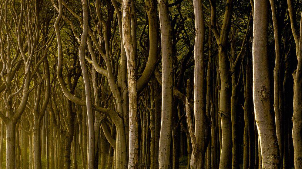 """Fotoband """"Woodlands"""": Meditation über Baumstämme"""