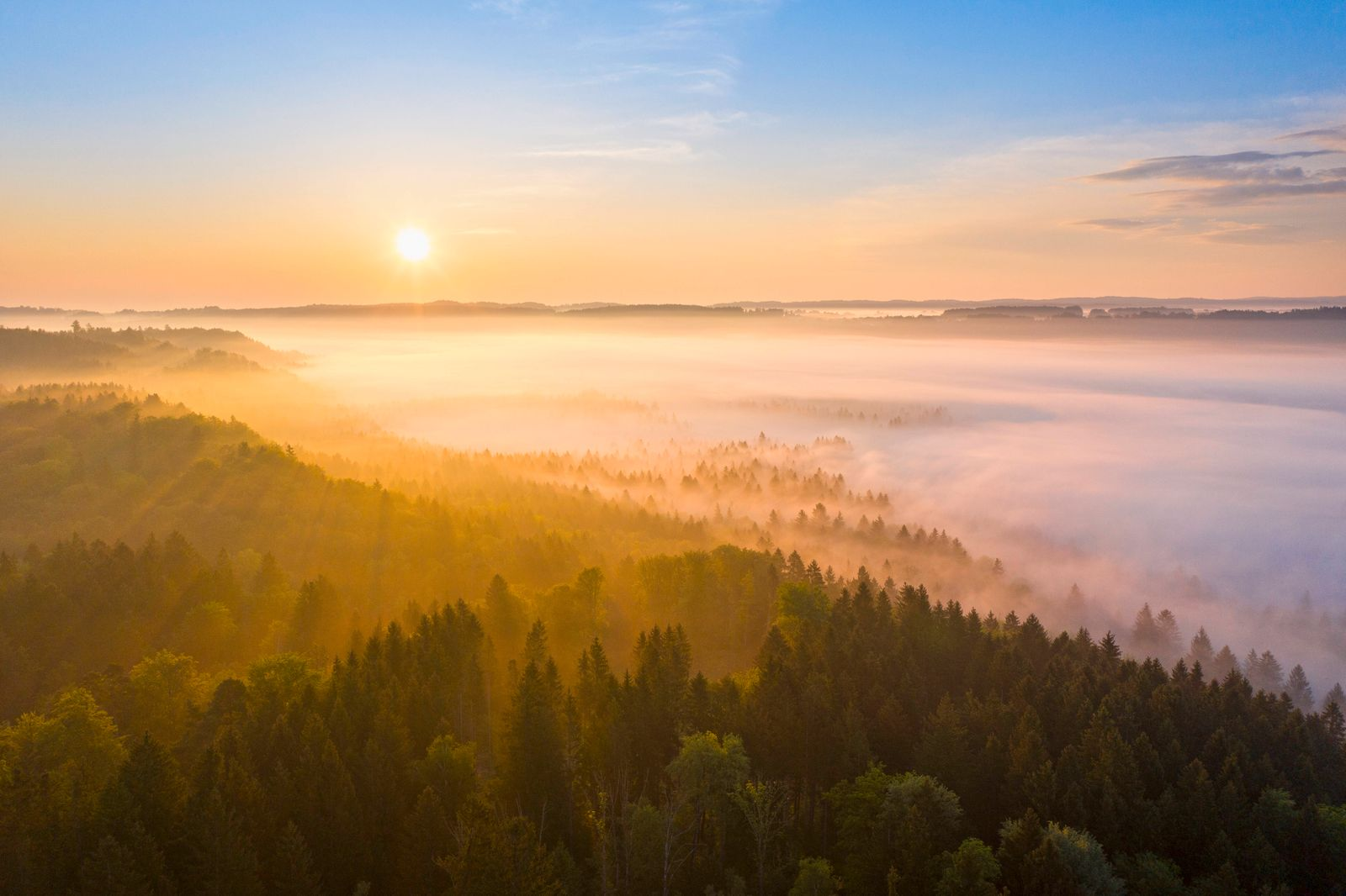 Germany, Bavaria, Icking, Drone view of countryside forest at foggy sunrise SIEF09908