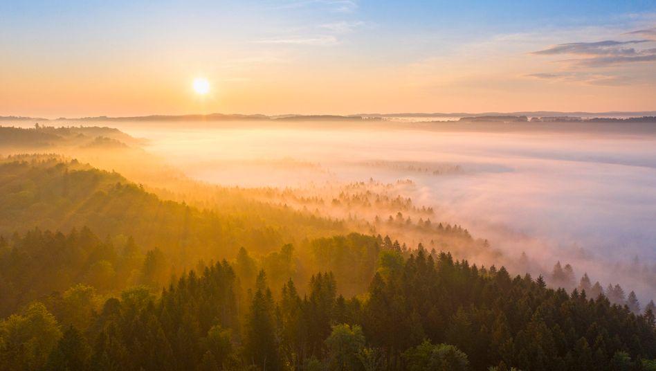 """Naturlandschaft in Bayern: """"Armutszeugnis"""" für die Uno"""