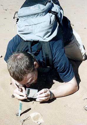 Spinnenexperte Birkhofer: Mit der Sorgfalt eines Minensuchers
