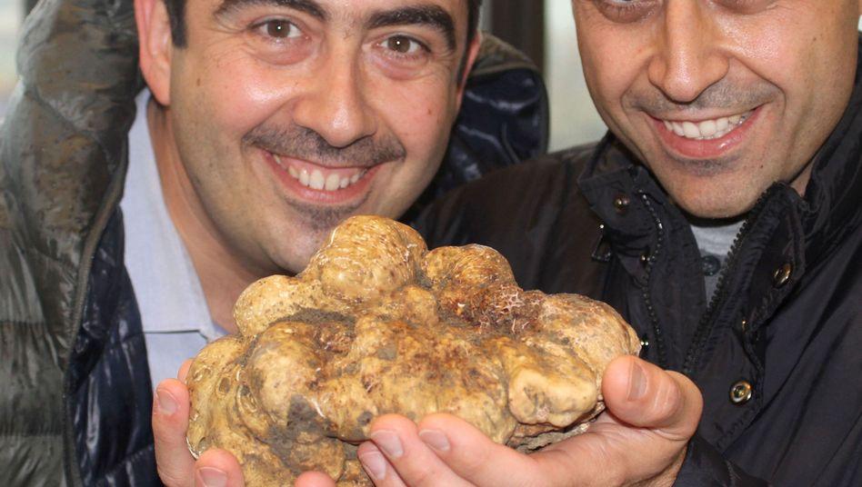 Luigi und Angelo Dattilo präsentierenden den vielleicht größten Edelpilz der Welt