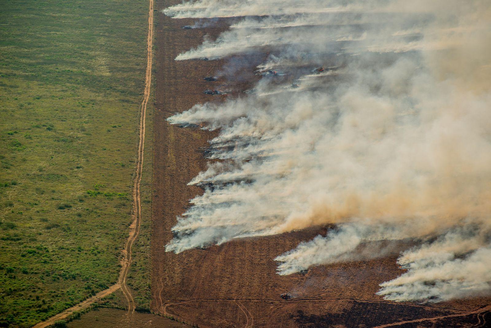 Brände im brasilianischen Amazonas-Gebiet nehmen zu