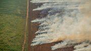 Amazonas-Regenwald brennt heftiger als im Katastrophenjahr 2019