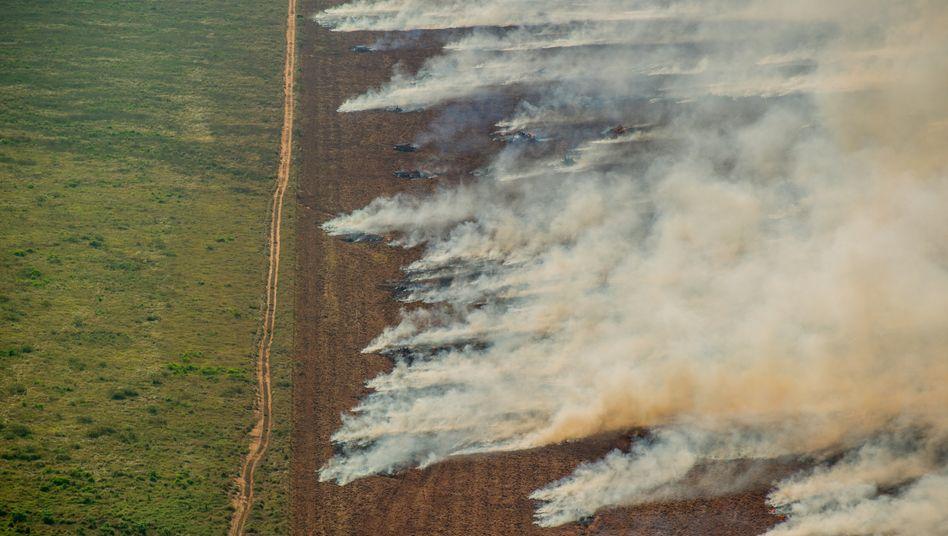 Feuer in Brasilien: Anstieg der Brände um 28 Prozent