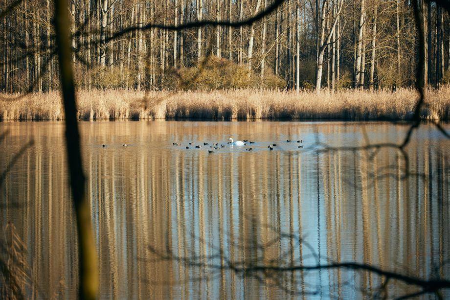 Wasservögel auf den Karower Teichen. Die Kraniche, von denen Oliver Krischer gleich sprechen wird, sind leider nicht mit auf dem Bild.
