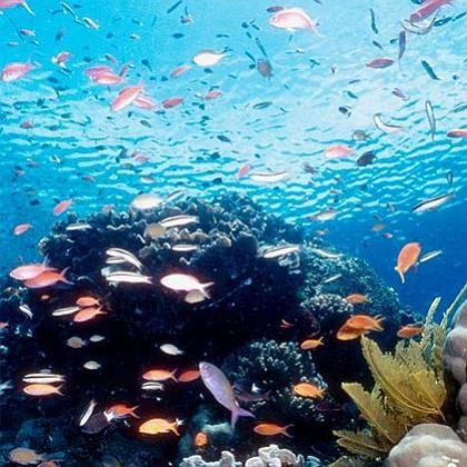 Fische am Great Barrier Reef in Australien: Ausscheidungen beeinflussen pH-Wert