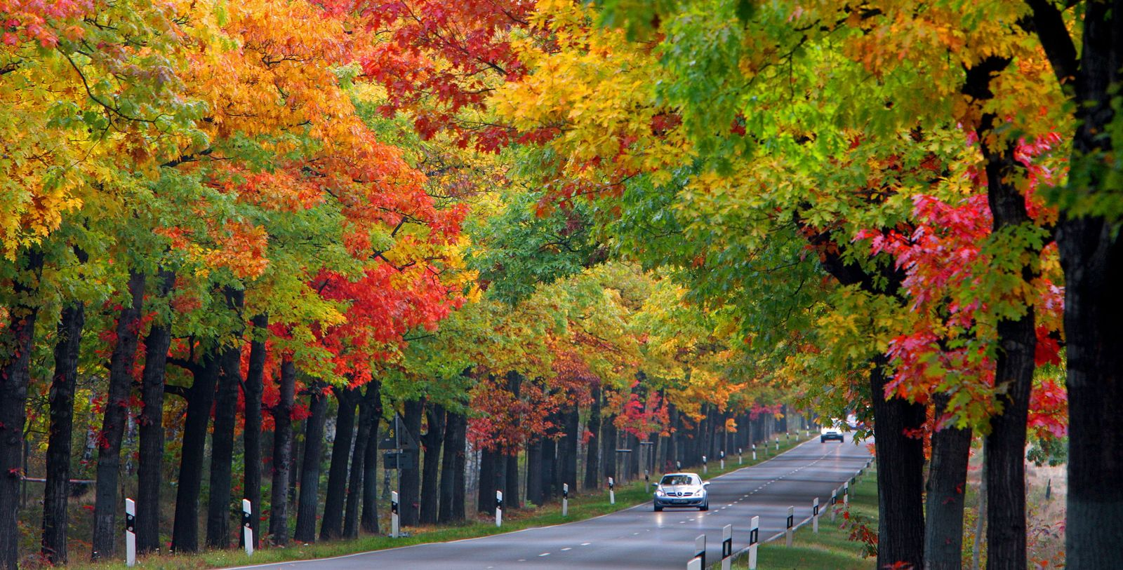 Herbstliche Allee in Brandenburg