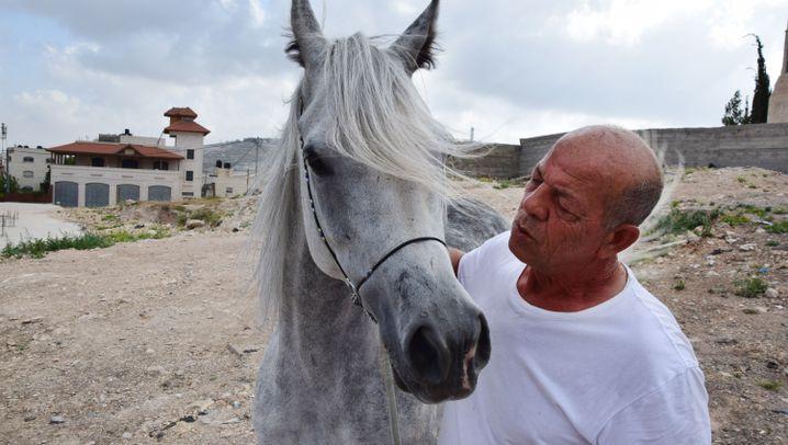 Züchter in Ostjerusalem: Pferde zwischen Hochhäusern