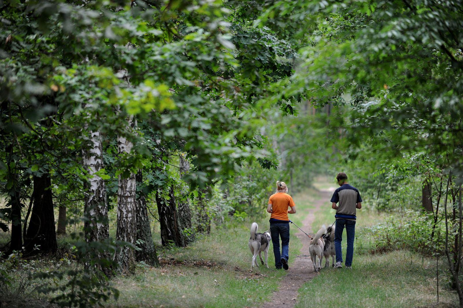 Spaziergänger mit Hunden
