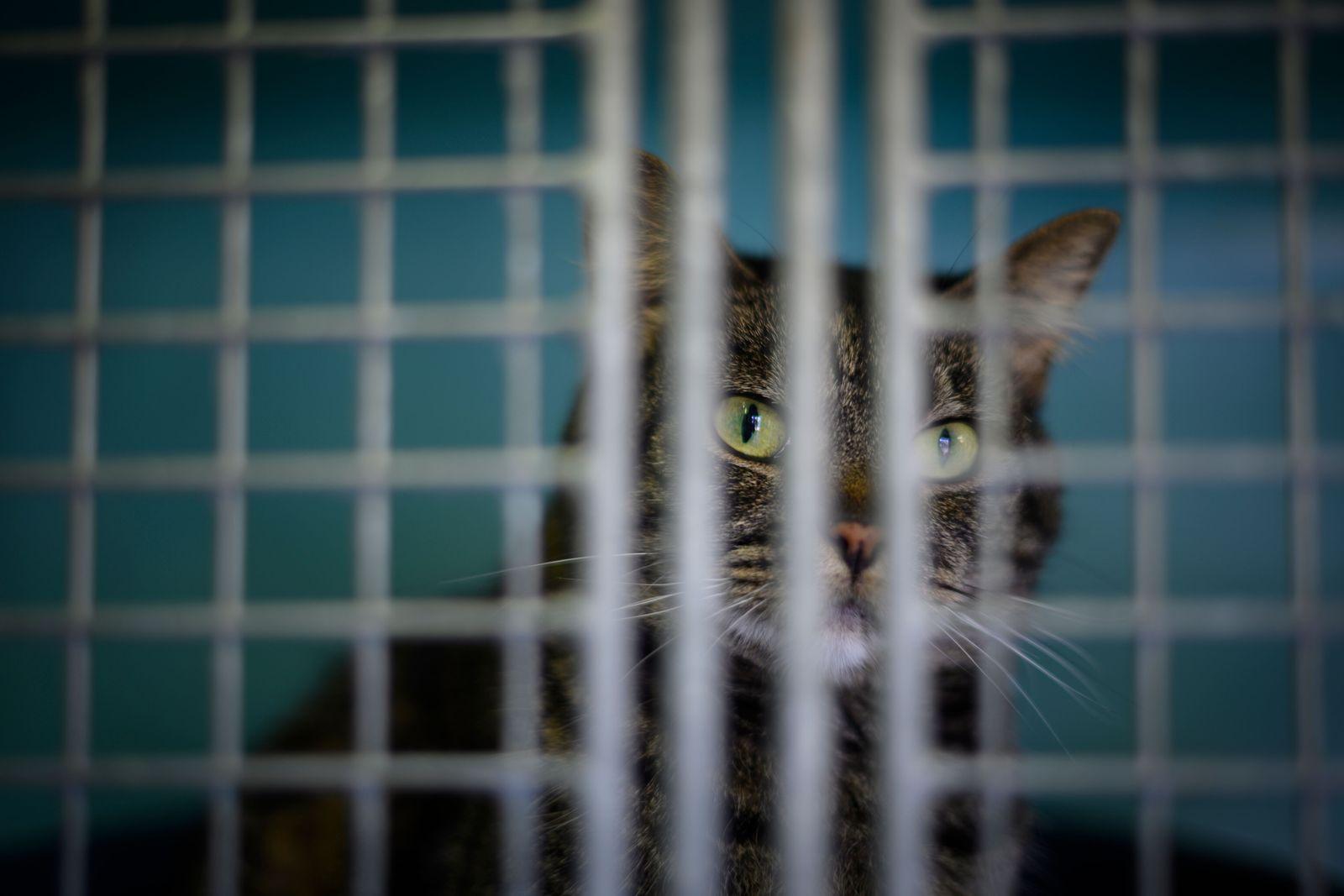 Katze/ Gitter