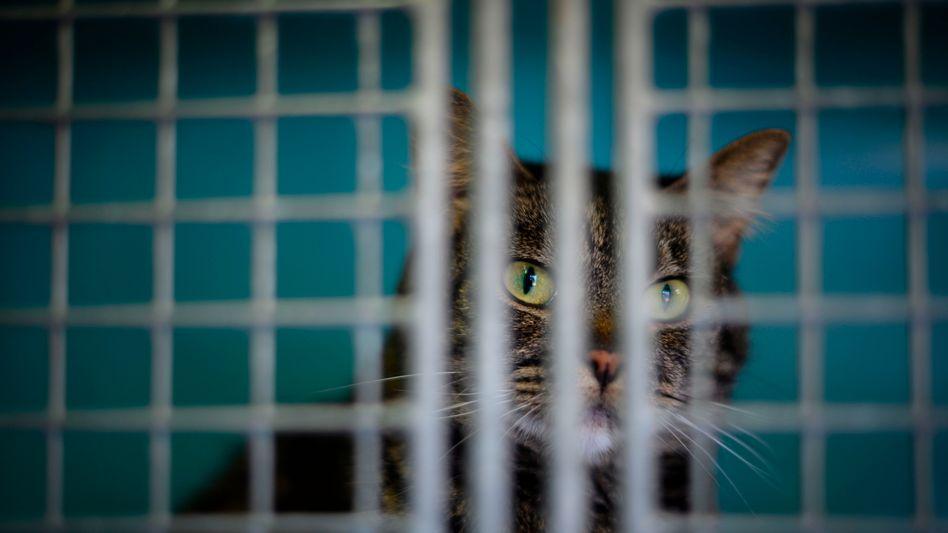 Katze hinter Gittern (Symbolbild)