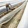 Bundesregierung erleichtert Saisonarbeit in der Landwirtschaft