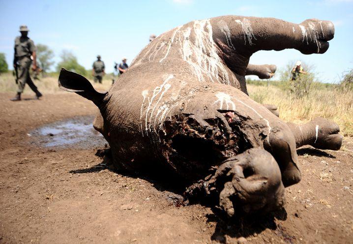 Totes Nashorn im Krüger-Nationalpark: Gegen den Menschen keine Chance