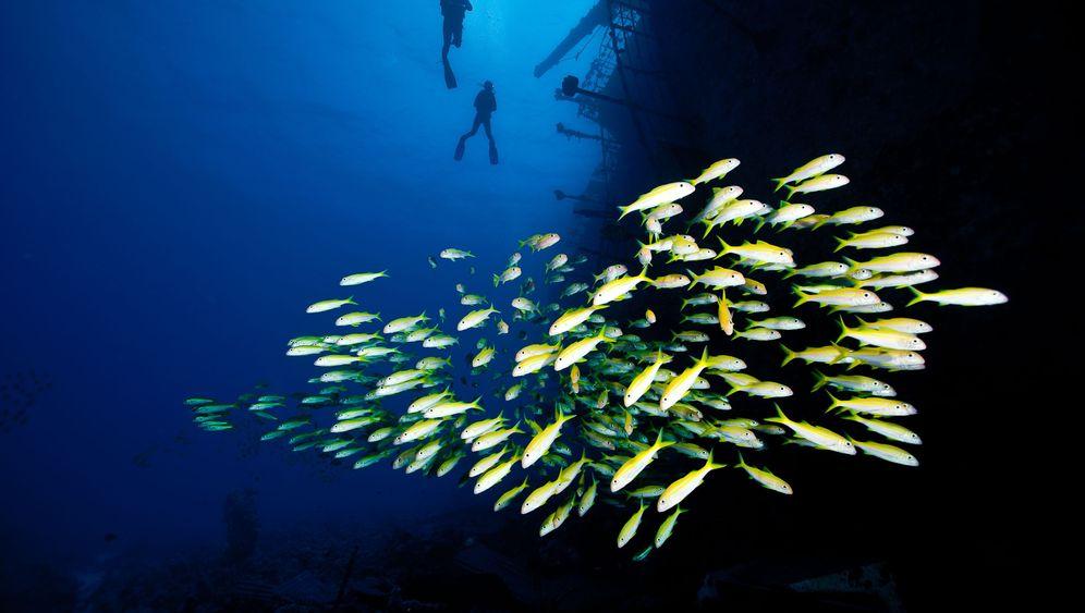 Tauchen in Ägypten: Mehr Fisch als Neopren