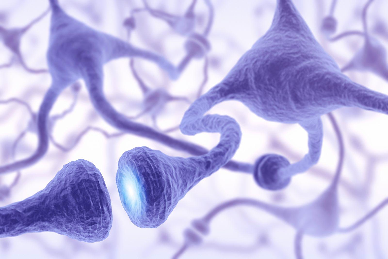 NICHT MEHR VERWENDEN! - Synapsen