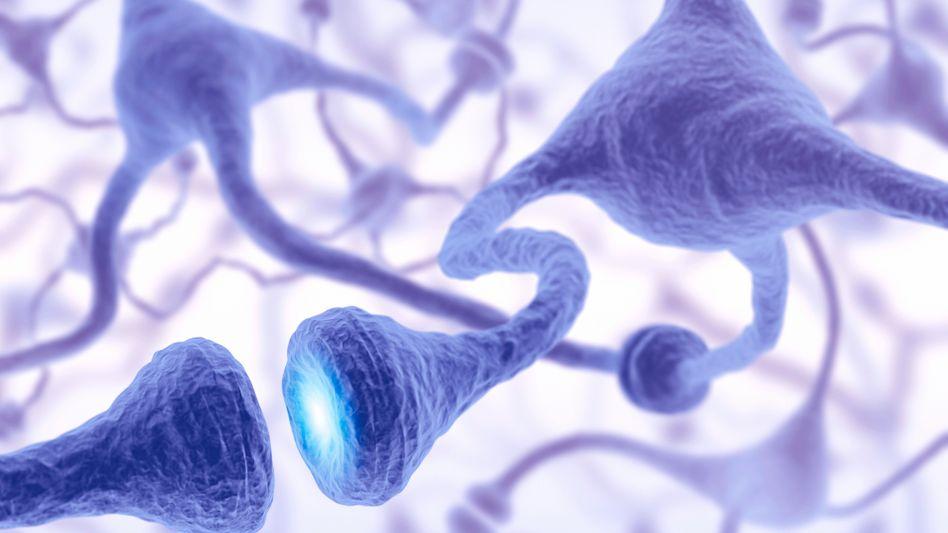 Synapse (künstlerische Darstellung): Shank3-Gen beeinflusst Signalweiterleitung im Gehirn
