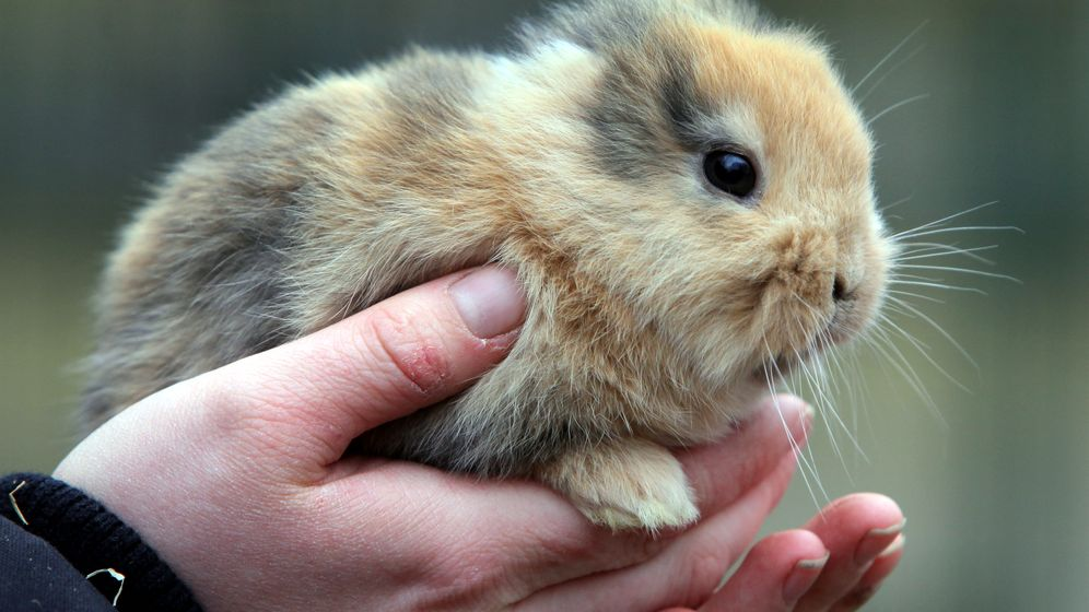 Photo Gallery: Rest in Peace, Earless Bunny Til