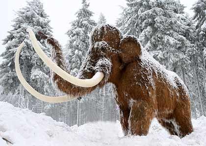 """Mammut-Modell: """"Wir sollten lieber noch lebende Tiere vor dem Aussterben bewahren, statt ausgestorbene wieder zum Leben zu erwecken"""""""